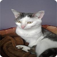Adopt A Pet :: Charity - Wyandotte, MI