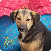 Adopt A Pet :: Zaire - Cincinnati, OH