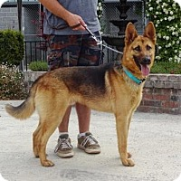 Adopt A Pet :: Leo - Lathrop, CA