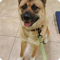 Adopt A Pet :: Claire - Reisterstown, MD