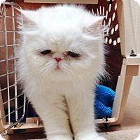 Adopt A Pet :: Elsa - Davis, CA