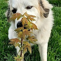 Adopt A Pet :: Remmington - Quincy, IN