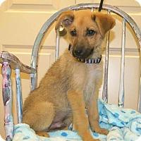 Adopt A Pet :: Stoney 💙 DOB 3/02/17! - Saratoga Springs, NY