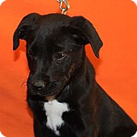 Adopt A Pet :: HURRYHURRY - Broomfield, CO
