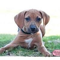 Adopt A Pet :: Carl - Haverhill, MA