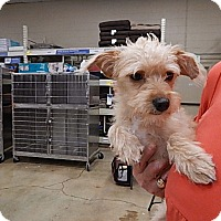 Adopt A Pet :: Rascal - Tucson, AZ