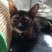Adopt A Pet :: Scottie Ann - San Bernardino, CA