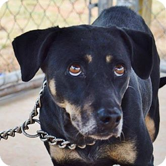 Beagle Mix Dog for adoption in Jasper, Georgia - Mimzy