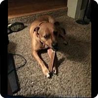 Adopt A Pet :: Courtesy Post) BRUTUS - Upper Sandusky, OH