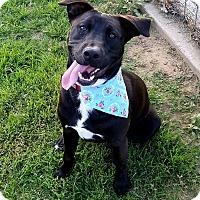 Adopt A Pet :: Potsy - Wichita Falls, TX