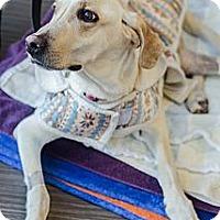 Adopt A Pet :: Ellie - Cumming, GA
