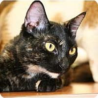 Adopt A Pet :: Sasha - Naples, FL