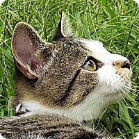 Adopt A Pet :: Mr. Whiskers - Midway, GA