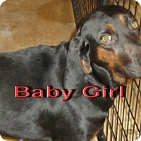 Hound (Unknown Type) Mix Dog for adoption in Coleman, Texas - Baby Girl