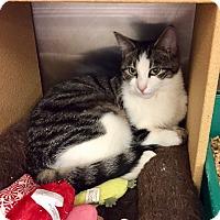 Adopt A Pet :: Biggs -Adoption Pending! - Colmar, PA