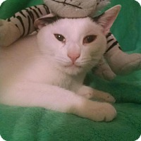 Adopt A Pet :: BUBBA - Whitestone, NY