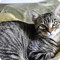 Adopt A Pet :: SKITTLES *Video! (Ormond, FL) - New Smyrna Beach, FL