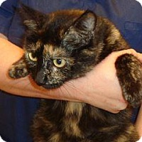 Adopt A Pet :: Patches - Wildomar, CA