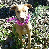Adopt A Pet :: JASMINE - Princeton, KY