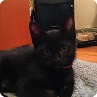 Adopt A Pet :: Gabin - Chicago Heights, IL