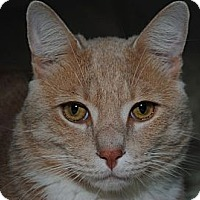 Adopt A Pet :: Scooby - Waxhaw, NC