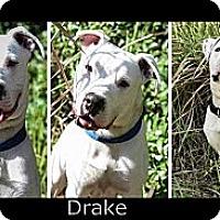 Adopt A Pet :: Drake - Bartow, FL