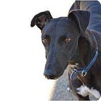 Adopt A Pet :: Celine (El Celine) - Chagrin Falls, OH