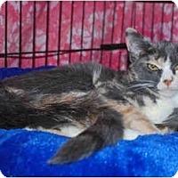 Adopt A Pet :: Muffin - Colmar, PA