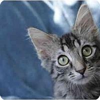Adopt A Pet :: Ian - Columbus, OH