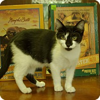 Adopt A Pet :: Marbles - Ocala, FL
