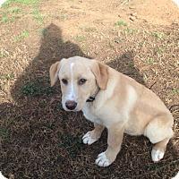 Adopt A Pet :: Wallace - Cumming, GA