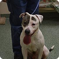 Adopt A Pet :: Patch - Chicago, IL