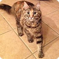 Adopt A Pet :: Clover - Madisonville, LA