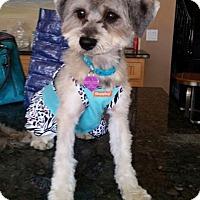 Adopt A Pet :: Eliza - Covina, CA
