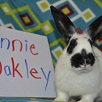 Adopt A Pet :: Annie Oakley - Erie, PA