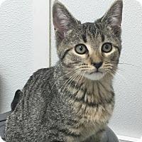 Adopt A Pet :: Billyboy - Manteo, NC