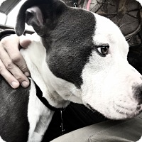 Adopt A Pet :: Merlin - grants pass, OR