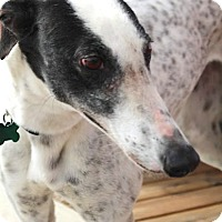 Adopt A Pet :: China - Tucson, AZ