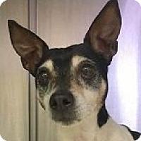Adopt A Pet :: Rider - Springdale, AR