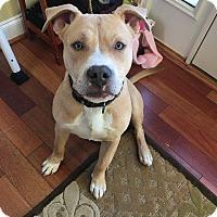 Adopt A Pet :: Mattis - Leonardtown, MD