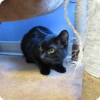 Adopt A Pet :: Ivan - Northfield, MN