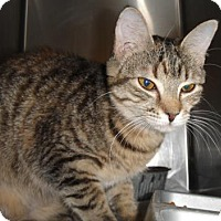 Adopt A Pet :: Celeste - Ridgeland, SC