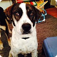 Adopt A Pet :: Lucky Star - Little Rock, AR