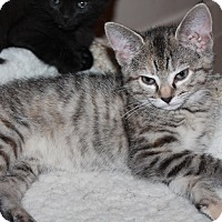 Adopt A Pet :: Rascal - Naperville, IL