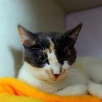 Adopt A Pet :: Saki Pampa Avery - Denver, CO