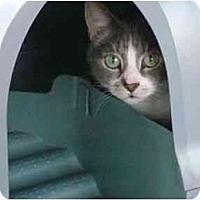 Adopt A Pet :: Lovey - Port Republic, MD