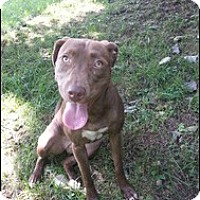 Adopt A Pet :: Zinnia - Elderton, PA