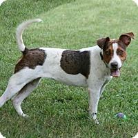 Adopt A Pet :: Fiona - Lufkin, TX