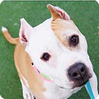 Adopt A Pet :: Arlee - Las Vegas, NV