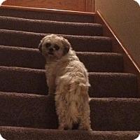 Adopt A Pet :: Faith - Prole, IA